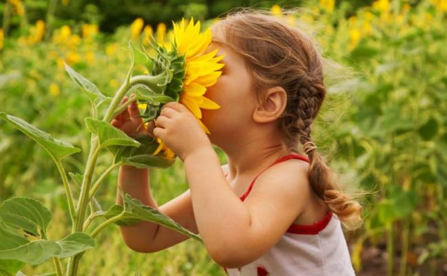 child and sunflower